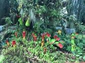 Lego carnivorous plants!